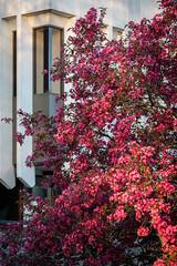 Spring Campus Flowers-3