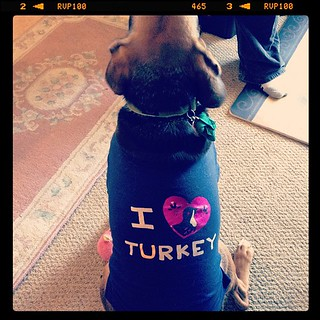 "It's officially Thanksgiving when #Nico puts on his ""I turkey turkey"" shirt!"