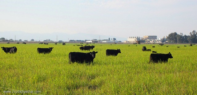 Not A Factory Farm : Look at how beautiful that grass is!