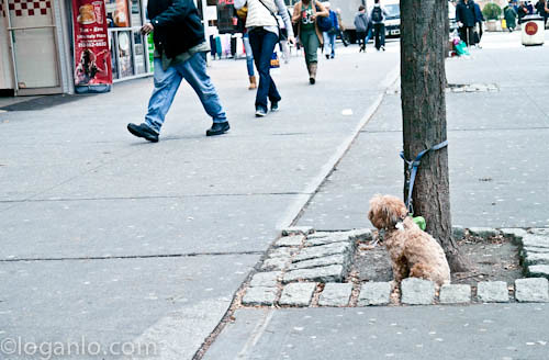 Dog tied to tree in NYC
