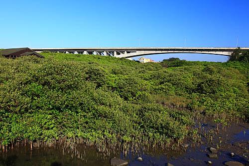 43L8新豐紅樹林生態保護區