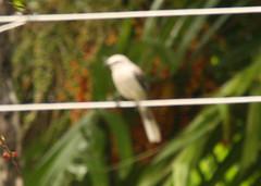 Guyana-0431