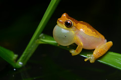[Free Images] Animals 2, Amphibian, Frogs ID:201112100400