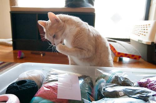 yarn stash and helper cat