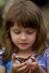 Hello Pretty Butterfly