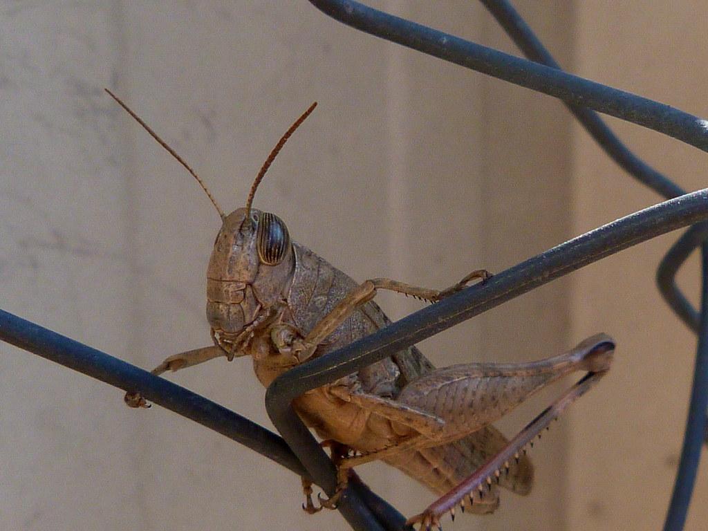 23-11-2011-grasshopper3