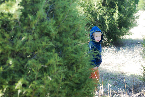 in search of the tree