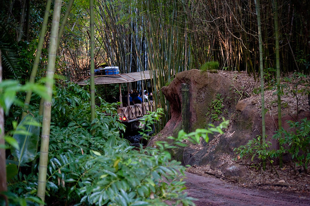 Animal Kingdom Safari