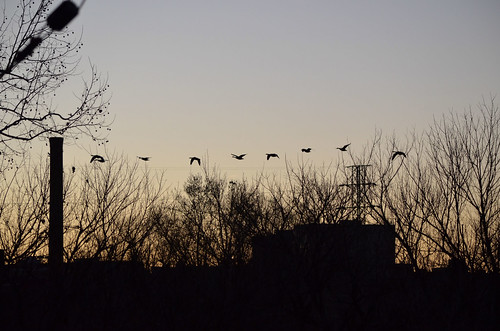sunset birds silhouette photography virginia geese photo photos va riverwalk danvillevirginia danvilleva