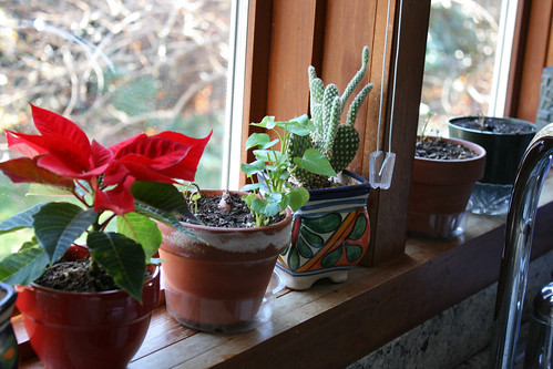 sprouts on the sill 079