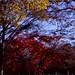 秋の三原色
