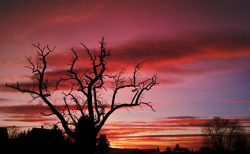 praising sunset