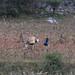 Man harvesting corn - Hombre cosechando maíz; entre San Vicente Lachixio y San Sebastian de las Grutas (al norte de Sola de Vega), Oaxaca, Mexico por Lon&Queta