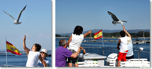 Feeding seaguls... #sequence by VRfoto