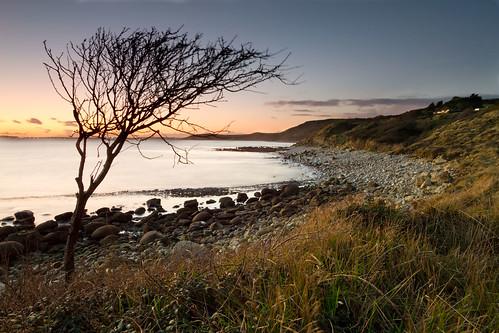 sunset sea tree canon coast twilight sigma dorset 7d 1020 jurassic osmington