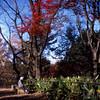 冬景色の残秋