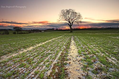 uk england tree ice field grass sunrise landscape sony sigma northeast manfrotto countydurham wingate peterlee