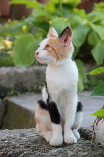[フリー画像素材] 動物 1, 猫・ネコ, 子猫・小猫 ID:201201011000