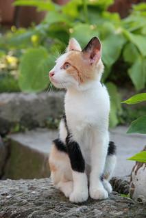 Pussycat LF