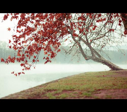 tree sadness europe hungary dof bokeh f14 tata 50mm14 fa magyarország angolpark cseketó sonyalpha700 mélységéletlenség