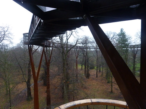 Treetop walkway 1