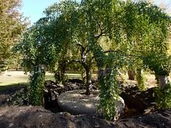 日, 2010-11-07 13:11 - New York Botanical Garden (Bronx) ブロンクスの NY植物園