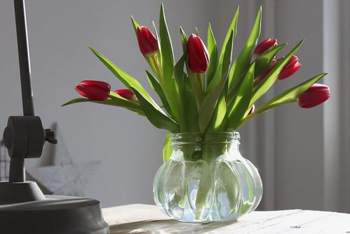 Tulpen im Januar