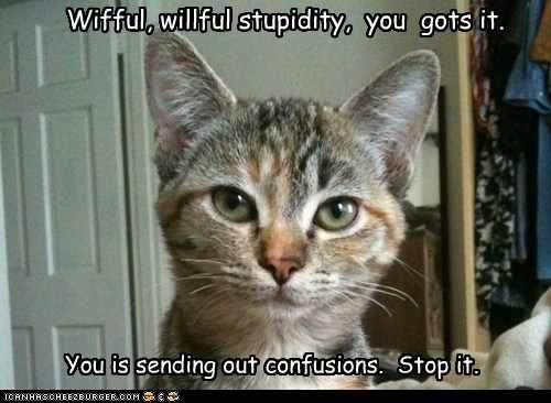 Willful Stupidity