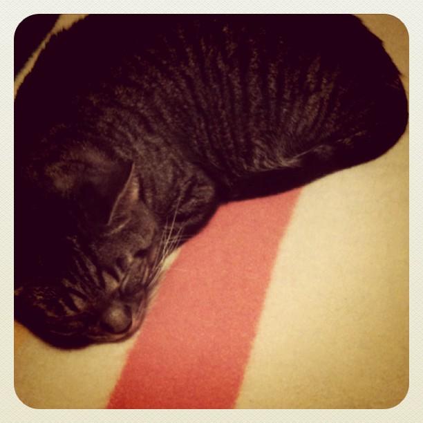 Little Girl Cat
