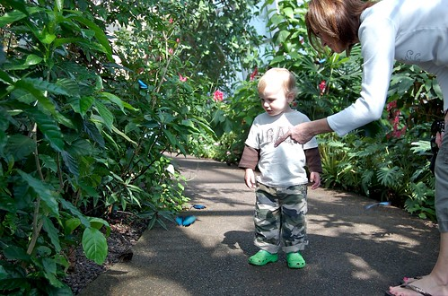 Butterfly House Offers Special Deal For Moms On Mother 39 S Day Missouri Botanical Garden News