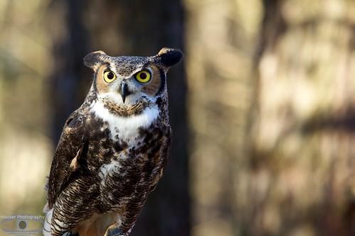 Carolina Raptor Center  Owl 642
