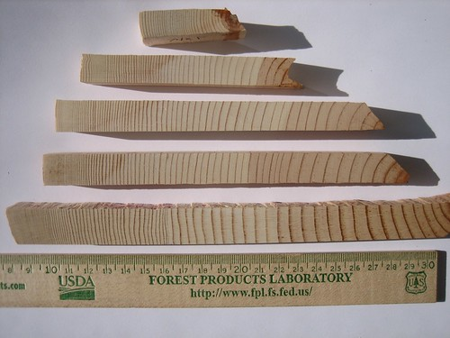 Suppressed growth trees can contain decades of growth rings in a half-inch section of wood.