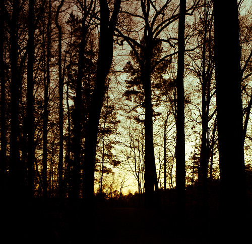 sunset eos rebel woods yesteryear caon xti