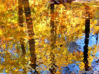 Fall Gold Reflection