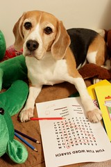 Yum Yum Word Search by Kaiser the Beagle