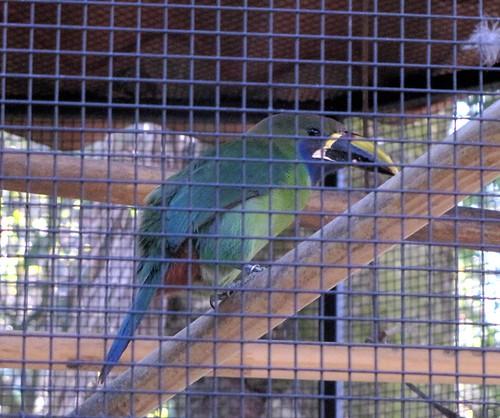 Simon Bolivar Zoo, San Jose, Costa Rica