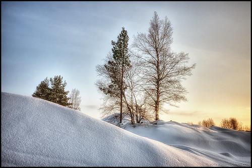 trees winter sunset sky snow cold vinter himmel snö hdr träd solnedgång kallt 7ex1ev
