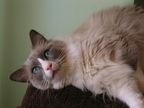 Splat Cat. by Leenechan