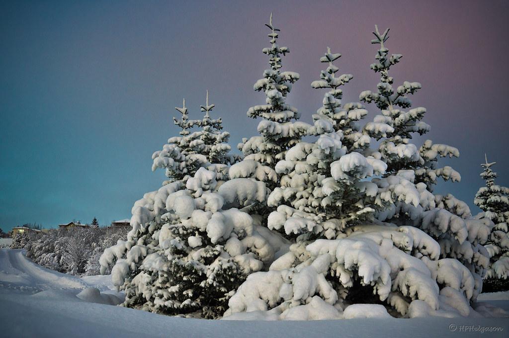 SNJÓRINN / THE SNOW