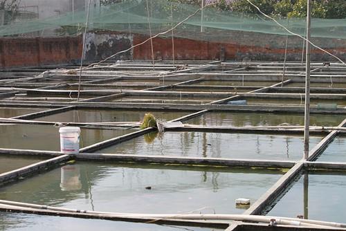 Goldfishfarm