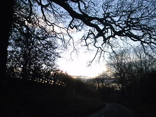 Hedgerow and branches