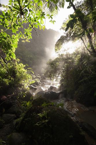 hot nature forest hotwater spring rainforest paradise unesco valley dominique unescoworldheritage dominica caribbeansea lesserantilles sulfate roseauvalley commonwealthofdominica trafalgafalls natureislandofthecaribbean