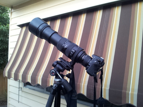 Nikon D7000 with Sigma 150-500mm and Kenko 2x converter