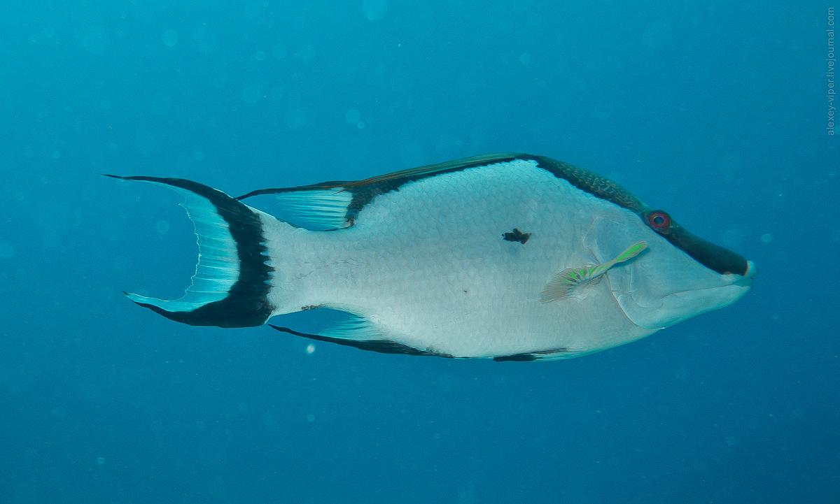 2012.01.12-2012.01.26_dive_safari_[cuba]-diving-013