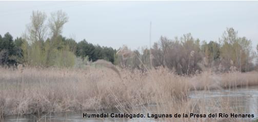 Humedal Catalogado de Mejorada del Campo