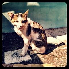 #Thai #cat