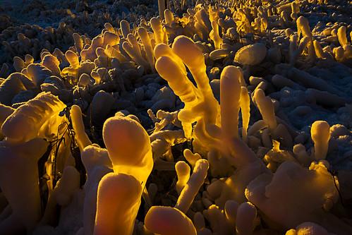 travel winter orange snow ice nature backlight sunrise reflections golden iceland artic wintersunrise goldensun icelandnature img8240 canoneos5dmarkii canonef2470mm128lusm sigmundurandresson