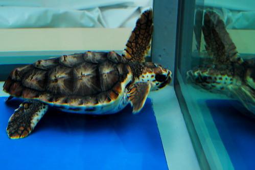 Nagoya Aquarium 235r