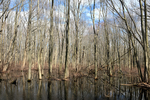 Northeastern Wetlands