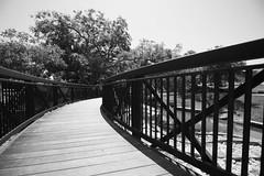 Walnut Springs Park (89 of 161).jpg